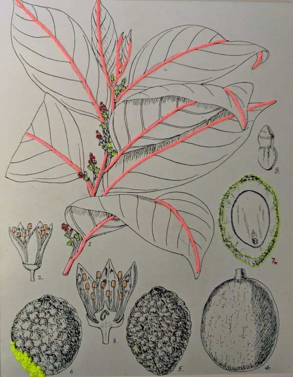 Embroidery art on black and white drawing of plants